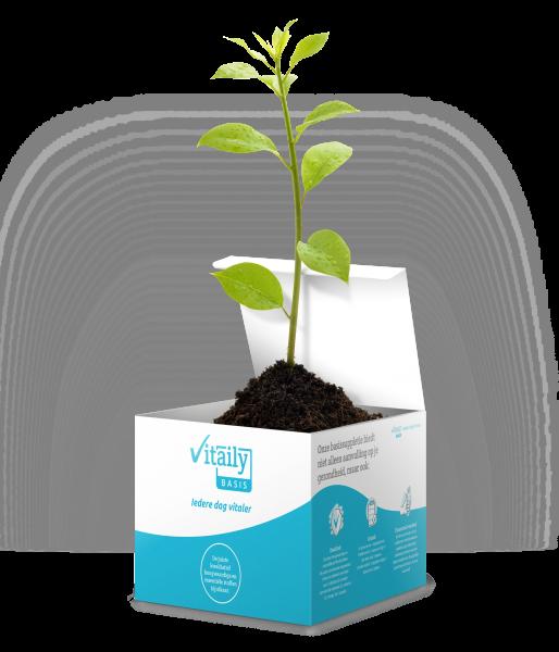 vitaily basis boom planten